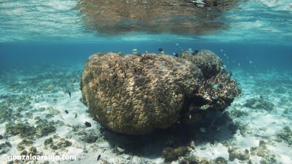 Pristine corals