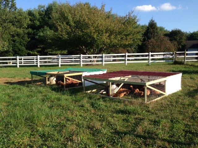 God's Glory Farm, Purcellville, VA, pasture raised non-GMO chicken