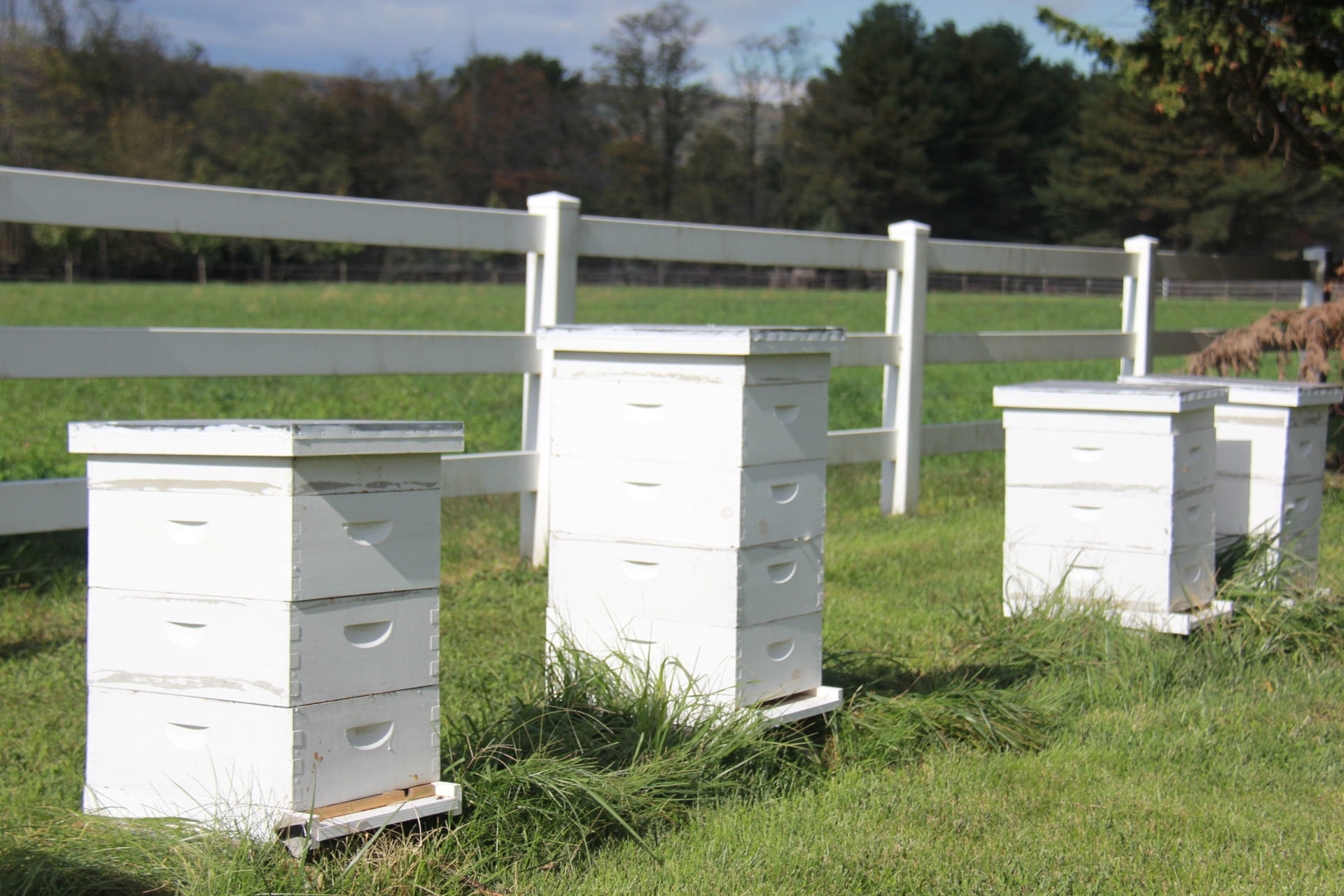 Soon to come: Farm Store and Beekeeping Supplies!