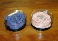 Ami Newby, roses, anzla, nz, new zealand