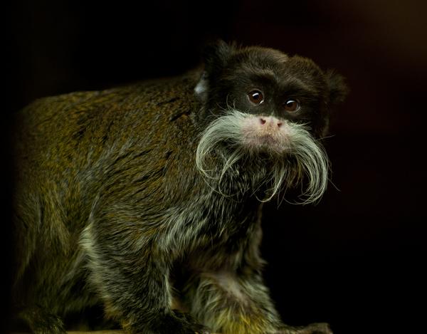 Movember Monkey