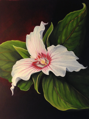 """""""Painted Trillium"""""""