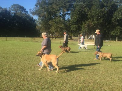 Saturday morning obedience class