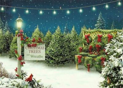 Christmas Tree Lot Near Me.Home