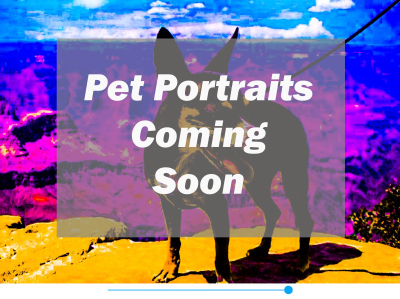 Pet Portraits Coming Soon