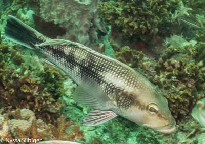 Gray's Reef National Marine Sanctuary