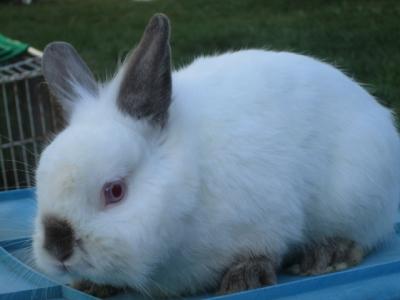 """Cyclone"" Bunny"