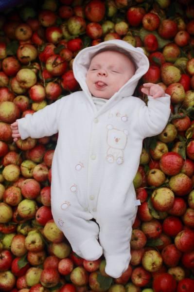 Harvest Sidney Baby