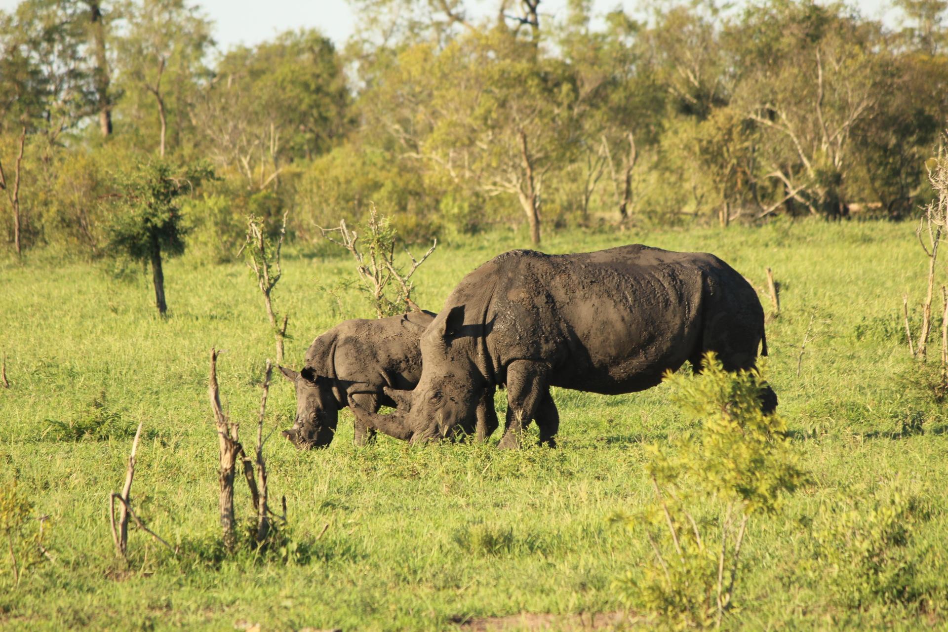2018 South Africa Trip, Part 19: Kruger National Park, Day 1