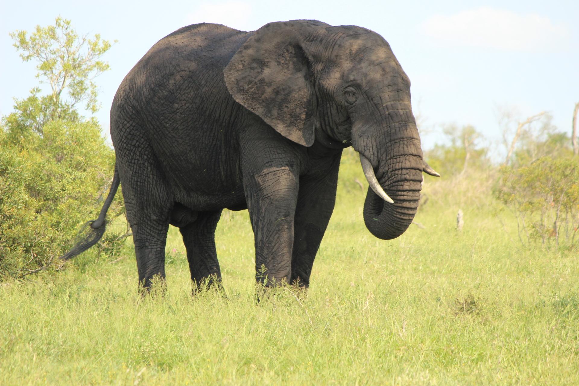 2018 South Africa Trip, Part 20: Kruger National Park, Day 2