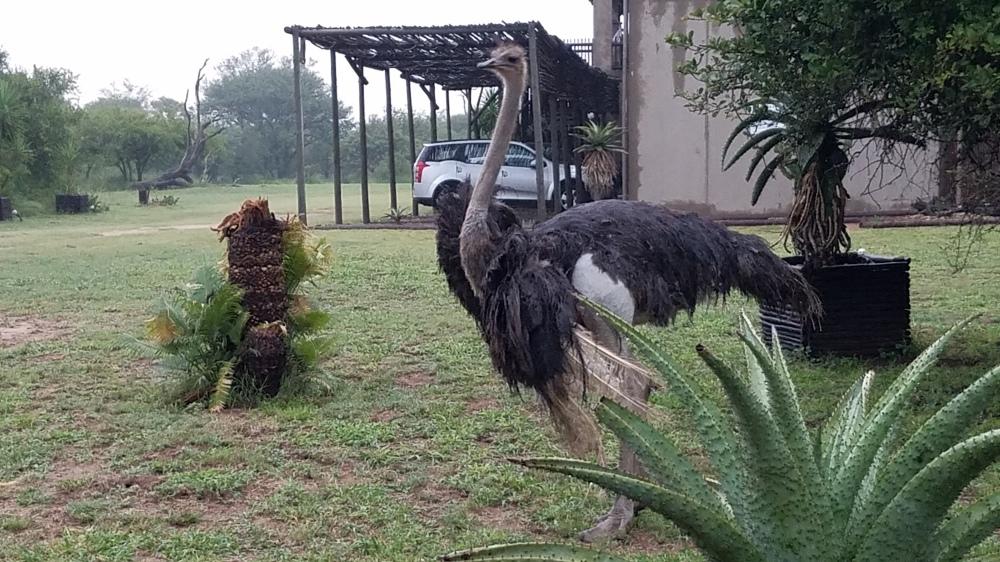 2018 South Africa Trip, Part 21: Kruger National Park, Day 3