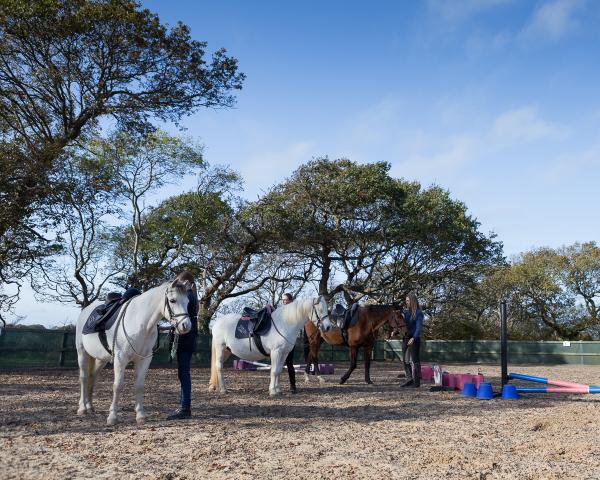Lesson & Saddle Club