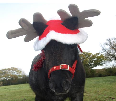 Christmas Pony Party