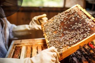 Hive Servicing and management