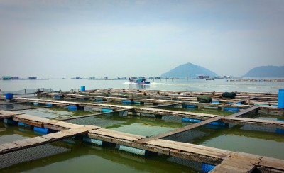 Buying table size groupers for export to China