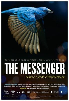 Film review: The Messenger - a documentary about songbirds