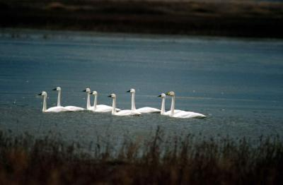 Edwin Forsythe National Wildlife Reserve - an uncommon day