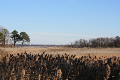 Eastern Neck NWR - Beginning a journey south  to a place where the uncommon is common