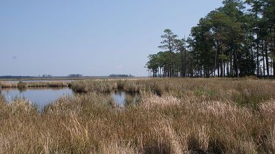 Blackwater NWR: Distant Fires