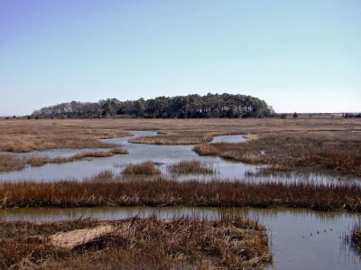 Eastern Shore NWR : A small but extremely important reserve