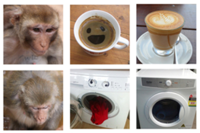 Eyes and Mouth: Primate Perception of Inanimate Faces