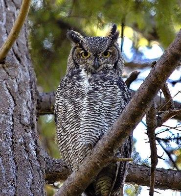 The Owl's Omen