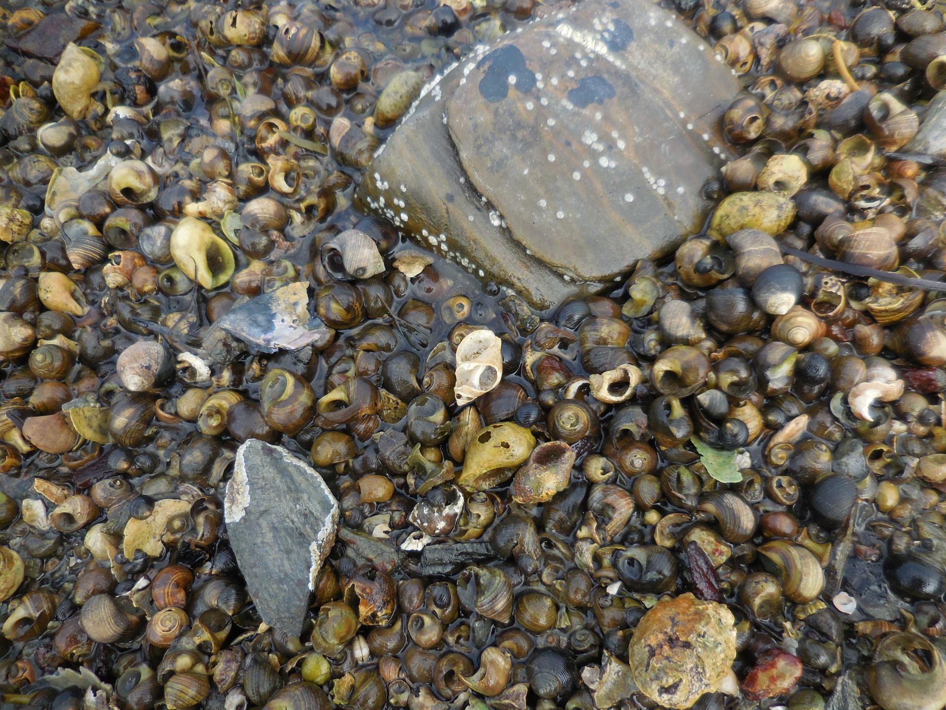 The autobiographies of snails
