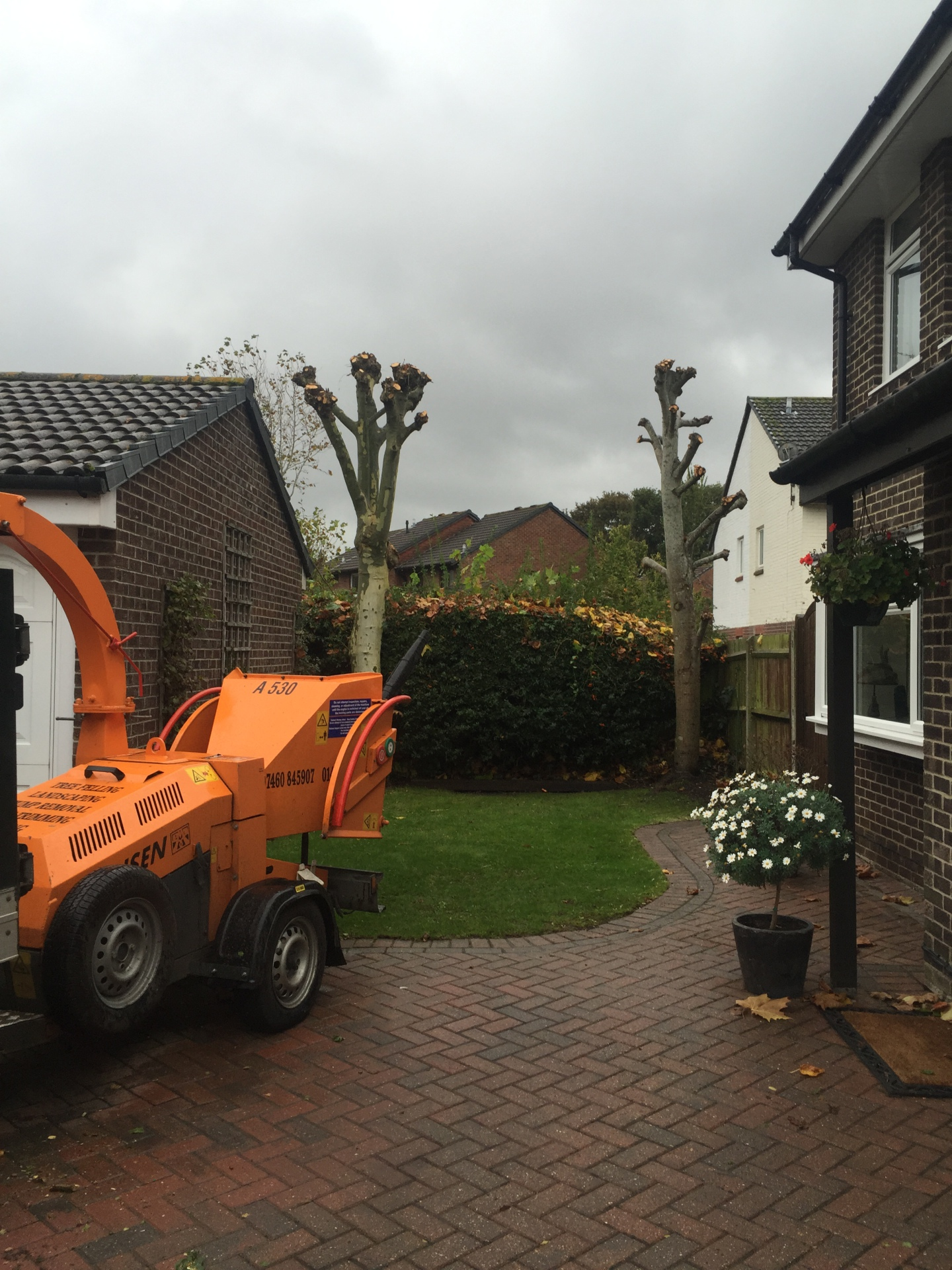 Tree surgeons Hampshire, pollard