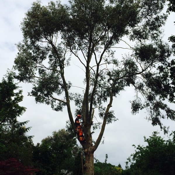 Tree surgeons Hampshire