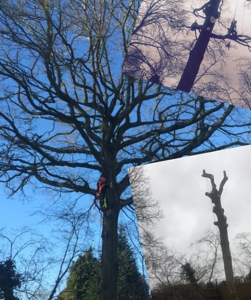 Tree surgeons Hampshire, Tree removal