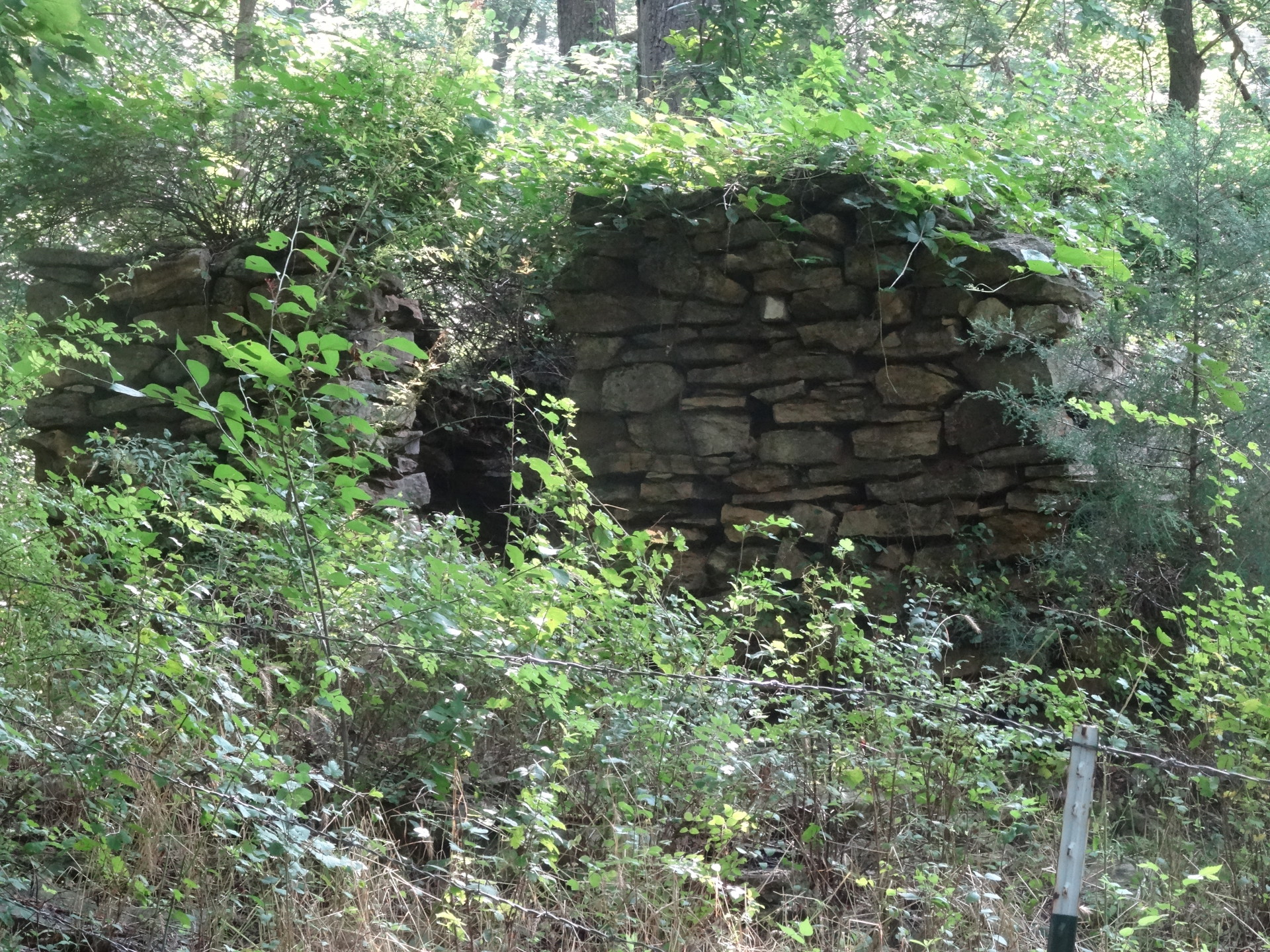 Old rock house on tree frog custom furniture property