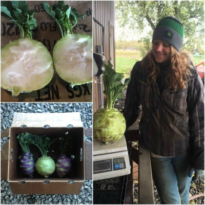 Melina with an 8 lb kohlrabi, yet sweet and tender inside!  Inset is purple and green kohlrabi.