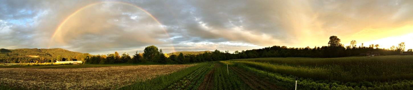 sunset, chubby bunny farm, Everson WA,
