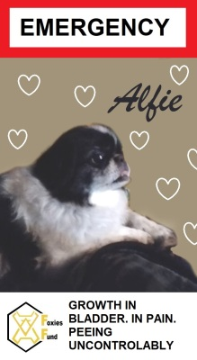 Alfie [EMERGENCY]
