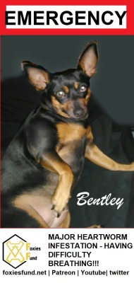 Bentley [EMERGENCY]