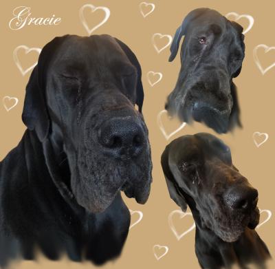 Gracie [URGENT]