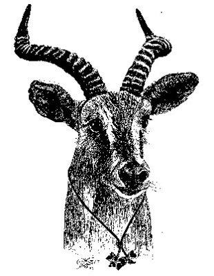 Antelope Patrol