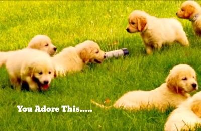 Happy Puppies In Garden