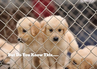Scared Puppies in Puppy Mill