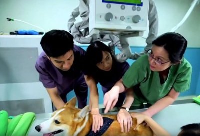 香港獸醫學院的需求及行業的發展