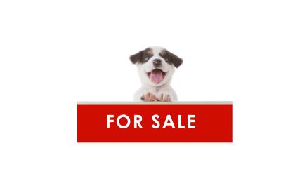 處理網上非法售賣狗隻事宜
