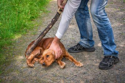 社會應專業處理虐待動物問題