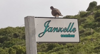 Janzelle seaview