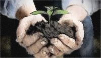 Image of hand nurturing a plant