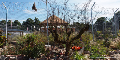 Photo of a dead Pomegranate tree in the UNHCR Border Control Show Garden designed by John Ward & Tom Massey