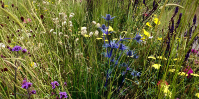 Photo of the central wildflower meadow in the UNHCR Border Control Show Garden designed by John Ward & Tom Massey