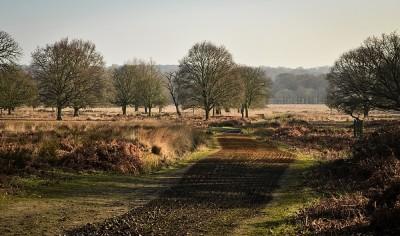 Photo of horse riding track through Richmond Park