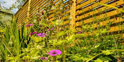 Photo of planting border