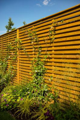 Photo of star jasmine climbing up the slatted fence panels