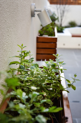 A small herb garden hanging on the garden wall